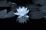 SILVER MEDAL - 2015 International Photography Awards - Philippines, Nature-Flowers, Non-professional category.