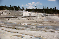 The Norris Geyser Basin is pictured in Yellowstone National Park, Wyoming on Wednesday, May 24, 2017. (Photo by James Brosher)