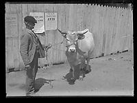 """inscription sur enveloppe : <br /> """"Foix : concours régional vache 30 Mai 1902<br />  Zion<br />  Jougla"""""""
