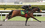 April 03, 2014: Hip 75 Flatter - Bank Deposit consigned by Eddie Woods worked 1/4 in 20:3.  Candice Chavez/ESW/CSM