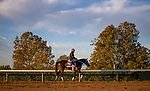 October 31, 2020: Vequist, trained by trainer Robert E. Reid Jr., exercises in preparation for the Breeders' Cup Juvenile Fillies at Keeneland Racetrack in Lexington, Kentucky on October 31, 2020. Alex Evers/Eclipse Sportswire/Breeders Cup