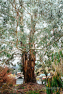 Image Ref: HC166<br /> Location: Wood's Point, Victoria<br /> Date: 11 June, 2016