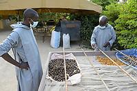 SENEGAL, Benedictine monastery Keur Moussa, herb garden / Senegal, Benediktinerkloster Keur Moussa, Heilkräutergarten