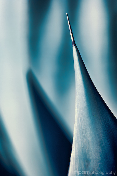 Black and white close-up of single agave spine. Taken in infrared.