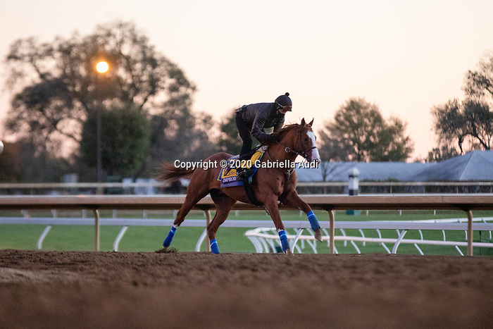 November 4, 2020: Improbable, trained by trainer Bob Baffert, exercises in preparation for the Breeders' Cup Classic at Keeneland Racetrack in Lexington, Kentucky on November 4, 2020. Gabriella Audi/Eclipse Sportswire/Breeder's Cup/CSM