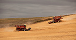 These two combines work together to harvest a large wheat field in the Palouse of Eastern Washington.
