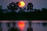 Sunset through palms and acacias, reflections in marsh, Ngamiland, Okavango Delta, Botswana