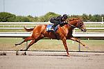#161Fasig-Tipton Florida Sale,Under Tack Show. Palm Meadows Florida 03-23-2012 Arron Haggart/Eclipse Sportswire.