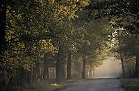 Europe/France/Centre/41/Loir-et-Cher/Sologne: Petit matin en forêt de Chambord
