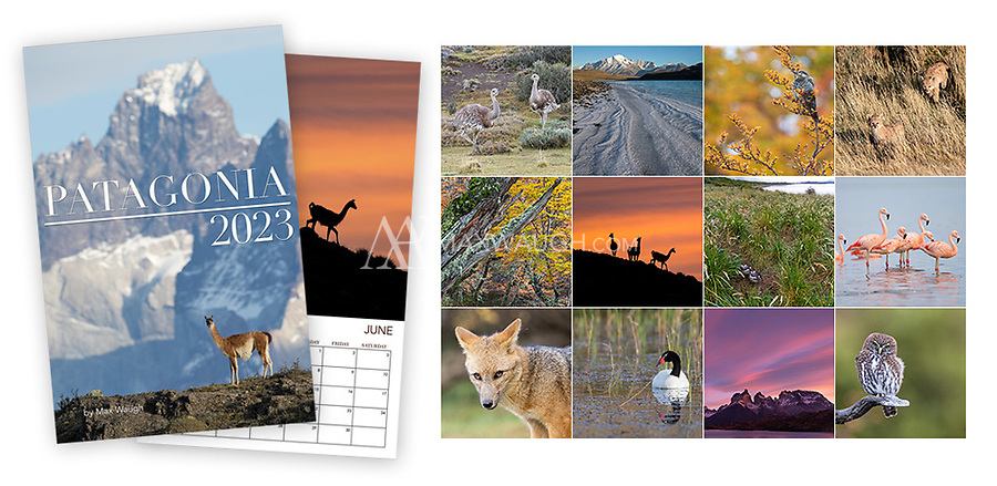 """**For international orders, please click on the red text in the top right corner.**<br /> <br /> The 2022 Pumas calendar features photos of wild pumas and cougars photographed in North, Central, and South America.<br /> <br /> **This is a Classic calendar, meaning it features the same images as last year's version.**<br /> <br /> Each month's photo measures a full 11 x 11, so these calendars now look even better on your wall. Calendars are printed on full 11"""" x 17"""" pages, spiral-bound at the top. Each interior page contains an image and full calendar for the month, so they are the equivalent of an 11"""" x 8.5"""" calendar that is folded open. Note that these calendars do not come with a pre-punched hole for hanging."""
