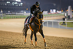 DUBAI,UNITED ARAB EMIRATES-MARCH 24: Gold Dream,trained by Osamu Hirata,exercises in preparation for the Dubai World Cup at Meydan Racecourse on March 24,2017 in Dubai,United Arab Emirates (Photo by Kaz Ishida/Eclipse Sportswire/Getty Images)