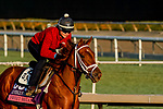 October 27, 2019 : Breeders' Cup Juvenile Fillies Turf entrant Sweet Melania, trained by Todd A. Pletcher, exercises in preparation for the Breeders' Cup World Championships at Santa Anita Park in Arcadia, California on October 27, 2019. John Voorhees/Eclipse Sportswire/Breeders' Cup/CSM