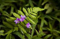 Purple flowers creeping through a fern leaf