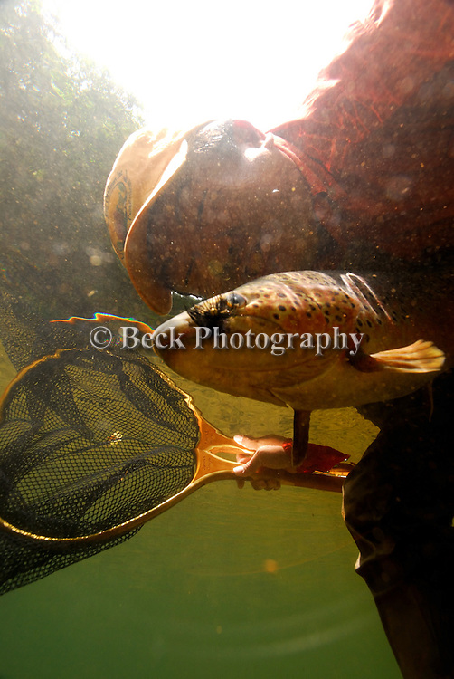 UNDERWATER PHOTO OF A TROUT
