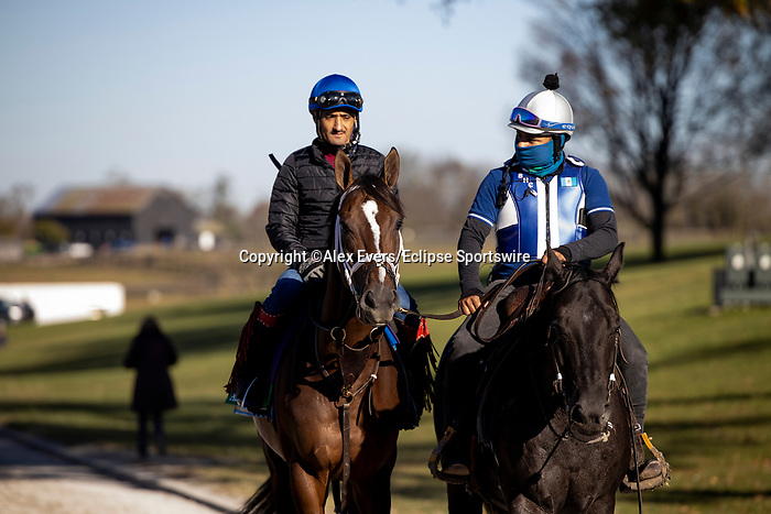 November 4, 2020: Arklow, trained by trainer Brad Cox, exercises in preparation for the Breeders' Cup Turf at Keeneland Racetrack in Lexington, Kentucky on November 4, 2020. Alex Evers/Eclipse Sportswire/Breeders Cup