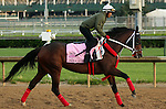 LOUISVILLE, KY - APRIL 25: Paola Queen (Flatter x Kadira, by Kafwain) gallops at Churchill Downs preparing for the Kentucky Oaks. Owner Grupo 7C Racing Stable, trainer Gustavo Delgado. (Photo by Mary M. Meek/Eclipse Sportswire/Getty Images)