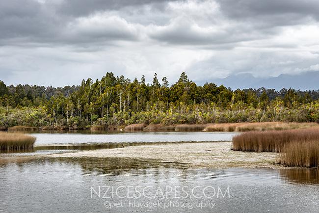 Okarito Lagoon wetland with Kotuku, white heron in distance, Westland Tai Poutini National Park, UNESCO World Heritage Area, West Coast, New Zealand, NZ