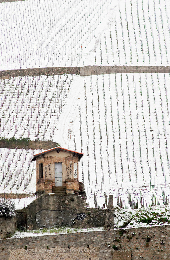 A tool shed in the vineyard. The Hermitage vineyards on the hill behind the city Tain-l'Hermitage, on the steep sloping hill, stone terraced. Sometimes spelled Ermitage. Vineyards under snow in seasonably exceptional weather in April 2005. Tain l'Hermitage, Drome, Drôme, France, Europe