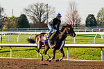 November 5, 2020: Tom's D'Etat, trained by trainer Albert M. Stall Jr., exercises in preparation for the Breeders' Cup Classic at Keeneland Racetrack in Lexington, Kentucky on November 5, 2020. Dan Heary/Eclipse Sportswire/Breeders Cup/CSM