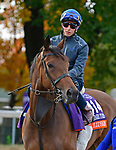 October 31, 2018 : Wild Illusion, trained by Charlie Appleby, trains for the Breeders' Cup Filly & Mary Turf with William Buick up at Churchill Downs on October 31, 2018 in Louisville, KY. Jessica Morgan/ESW/CSM