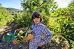 Apple picking at Avila Valley Barn, farm stand and petting zoo in Avila Valley, San Luis Obispo County, California
