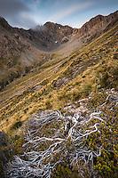 Alpine vegetation on slopes at Temple Basin, Arthur's Pass National Park, South Westland, South Island, New Zealand, NZ