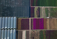 aerial photograph of  a flower farm in Carpinteria, Santa Barbara County, California