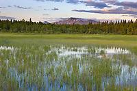 Wetland grasses and Mount Katolinat, Katmai National Park, southwest, Alaska.