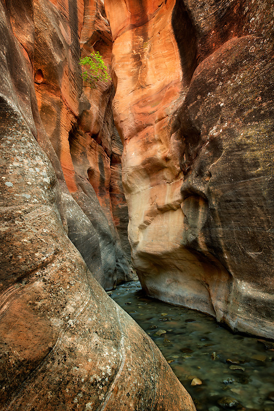 Kanarra Creek slot canyon. Utah. Dixie National Forest
