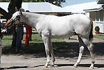Hip #402 Tapit - Tempting Note colt consigned by Gainesway farm became the session 2 sale topper Tuesday when he sold for $700,000 at the Keeneland September Yearling Sale.  September 10, 2012.