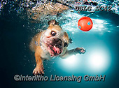 REALISTIC ANIMALS, REALISTISCHE TIERE, ANIMALES REALISTICOS, dogs, paintings+++++SethC_Lola_320B6919rev,USLGSC42,#A#, EVERYDAY ,underwater dogs,photos,fotos ,Seth