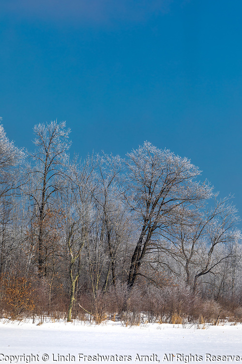 A February hoar frost in northern Wisconsin.