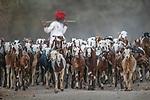 India, Rajasthan, goat herd
