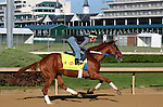 LOUISVILLE, KY - APRIL 24: Gun Runner (Candy Ride x Quiet Giant, by Giant's Causeway) exercises at Churchill Downs, Louisville KY in preparation for the Kentucky Derby. Owner Winchell Thoroughbreds LLC and Three Chimneys Farm, trainer Steven M. Asmussen. (Photo by Mary M. Meek/Eclipse Sportswire/Getty Images)