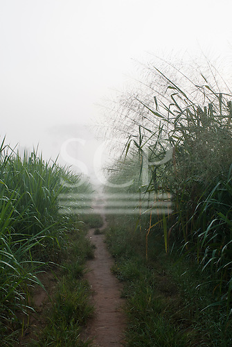 Xingu Indigenous Park, Mato Grosso State, Brazil. Aldeia Yawalapiti. Morning mist on the path to the river.