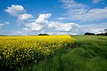 Europa, DEU, Deutschland, Hessen, Vogelsbergkreis, Schwalmtal, Agrarlandschaft, Raps, Rapsbluete, Himmel, Cumuluswolken, Kategorien und Themen, Natur, Umwelt, Landschaft, Jahreszeiten, Stimmungen, Landschaftsfotografie, Landschaften, Landschaftsphoto, Landschaftsphotographie, Wetter, Himmel, Wolken, Wolkenkunde, Wetterbeobachtung, Wetterelemente, Wetterlage, Wetterkunde, Witterung, Witterungsbedingungen, Wettererscheinungen, Meteorologie, Bauernregeln, Wettervorhersage, Wolkenfotografie, Wetterphaenomene, Wolkenklassifikation, Wolkenbilder, Wolkenfoto<br /> <br /> [Fuer die Nutzung gelten die jeweils gueltigen Allgemeinen Liefer-und Geschaeftsbedingungen. Nutzung nur gegen Verwendungsmeldung und Nachweis. Download der AGB unter http://www.image-box.com oder werden auf Anfrage zugesendet. Freigabe ist vorher erforderlich. Jede Nutzung des Fotos ist honorarpflichtig gemaess derzeit gueltiger MFM Liste - Kontakt, Uwe Schmid-Fotografie, Duisburg, Tel. (+49).2065.677997, ..archiv@image-box.com, www.image-box.com]