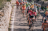 Tim Wellens (BEL/Lotto Soudal) in the bunch<br /> <br /> 27th Challenge Ciclista Mallorca 2018<br /> Trofeo Campos-Porreres-Felanitx-Ses Salines: 176km