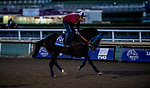October 30, 2019: Breeders' Cup Juvenile  entrant Anneau d'Or, trained by Blaine Wright, exercises in preparation for the Breeders' Cup World Championships at Santa Anita Park in Arcadia, California on October 30, 2019. Michael McInally/Eclipse Sportswire/Breeders' Cup/CSM