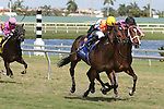 HALLANDALE BEACH, FL - JANUARY 21:  #3 Family Meeting(FL) with jockey Jose A Lezcano on board wins the Sunshine Millions Filly & Mare Turf at Gulfstream Park on January 21, 2017 in Hallandale Beach, Florida. (Photo by Liz Lamont/Eclipse Sportswire/Getty Images)