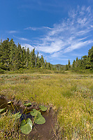 Tongass National Forest, Revillagigedo Island, southeast, Alaska.