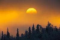 Sunset over winter boreal forest, Interior, Alaska.