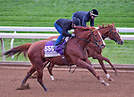 October 26, 2015 :  Judy the Beauty, trained by Wesley A. Ward and owned by Wesley A. Ward, exercises in preparation for the Breeders' Cup Filly & Mare Sprint at Keeneland Race Track in Lexington, Kentucky on October 26, 2015. Scott Serio/ESW/CSM
