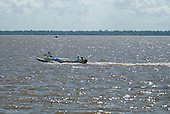 Pará State, Brazil. Gurupá, at the mounth of the Xingu River with the Amazon. Boat transporting a banana tree.