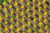 Baumschule: EUROPA, DEUTSCHLAND, NIESDERSACHSEN, BECKEDORF, (EUROPE, GERMANY), 19.10.2012: Europa, Deutschland, Niedersachsen, Beckedorf,  Nordheide, Baumschule, Baum, Baeume, bunt, gelb, Herbst, herbstlich, Pflanzen, Zucht, Reihe, Reihen, aufgereiht, aufgereihte, Pflanze, Baumpflanze, Baumpflanzen, Natur, Umwelt, Laub, Laubfall, Farbe, Luftbild, Luftbilder, Luftaufnahme, Luftaufnahmen, Uebersicht, Ueberblick, Vogelperspekte, Ordnung, ordentlich, System, systematisch