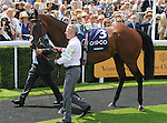 Kingman (no. 3), ridden by James Doyle and trained by John Gosden, wins the group 1 Sussex Stakes for three year olds and upward on July 30, 2014 at Goodwood Racecourse in Chichester, West Sussex, Great Britain.  (Bob Mayberger/Eclipse Sportswire)