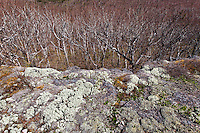 Maine, Baxter State Park: Stock