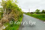 The dangerous hedge on the roadside in Kilbannivane, Castleisland