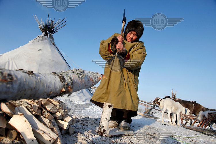 A Nenets woman chops wood outside her 'choom' or tent in Naryan-Mar in temperatures of -40 Celcius. The Nenets are the original inhabitants in the Russian Arctic but have been displaced by both Soviet-era collectivisation and modern gas and oil exploration. Reindeer provide the Nenets with food, shelter and clothing. They sell reindeer meat to sausage factories and the antlers to China for use as traditional medicine. /Felix Features