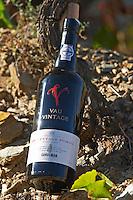 vineyard vau vintage 2000 quinta do seixo sandeman douro portugal