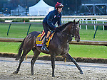 November 1, 2018 : Mendelssohn, trained by Aidan O'Brien, trains for the Breeders' Cup Classic at Churchill Downs on November 1, 2018 in Louisville, KY. Jessica Morgan/ESW/CSM